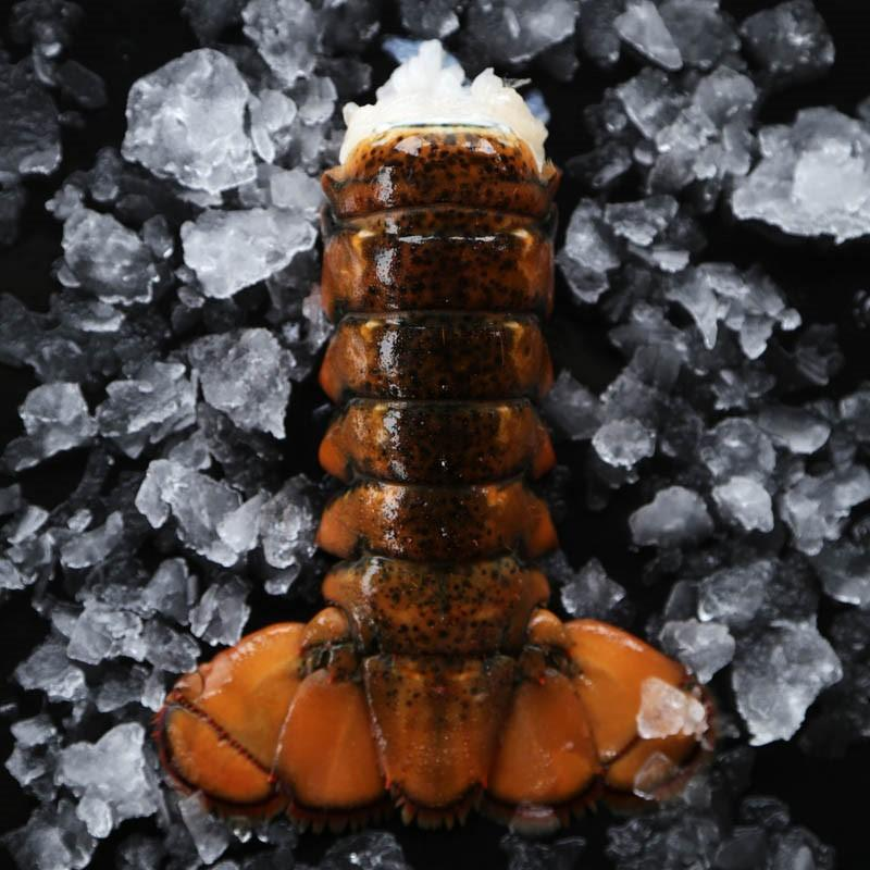 Atlantic Cold Water Lobster Tails