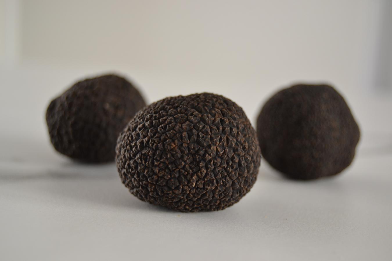 Fresh Black Winter Truffles (Tuber Melanosporum) - LIMITED DELIVERY DAYS
